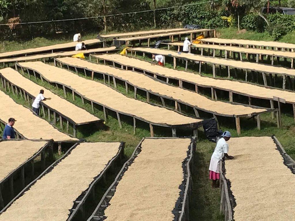 コーヒー栽培に適した環境